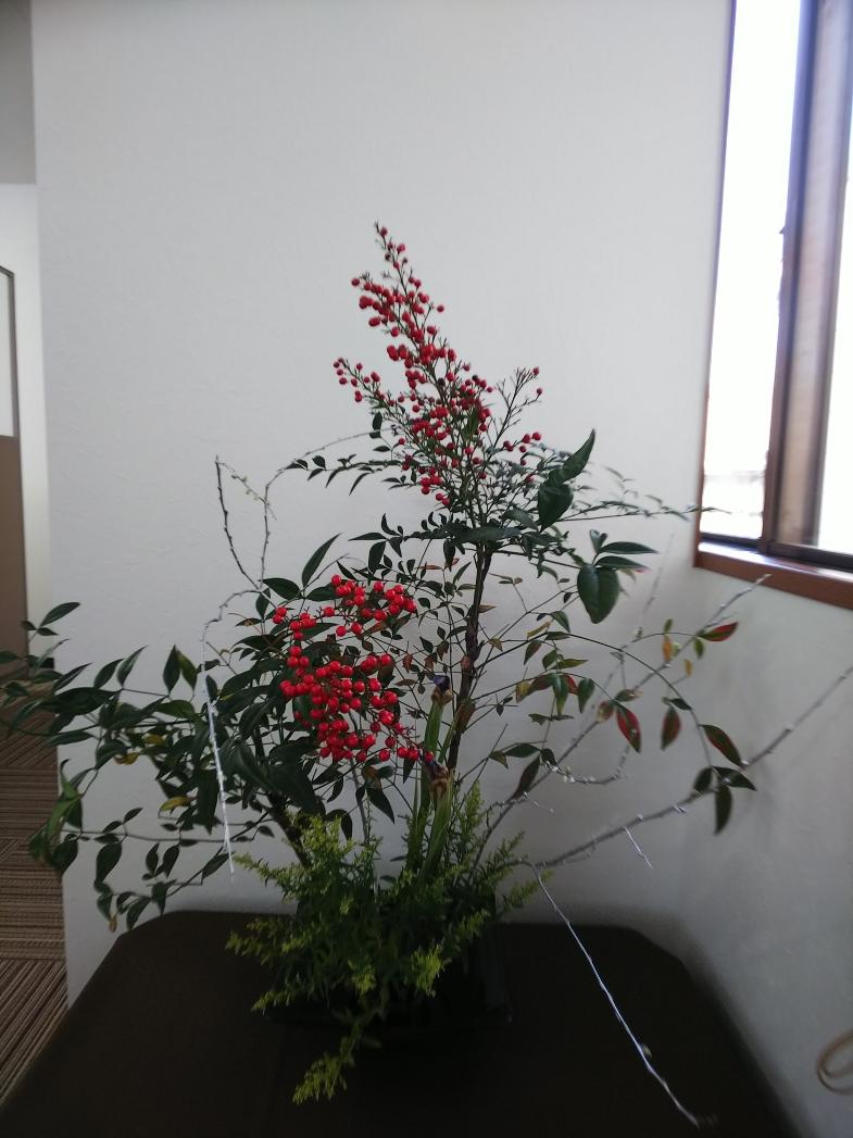確定申告の代行事務所の今週の花(1月21日)